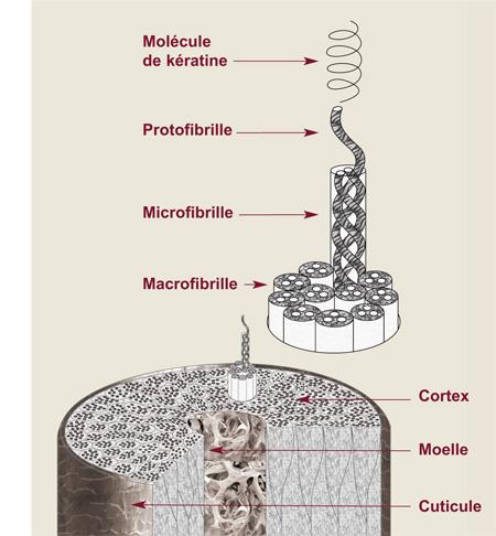 équilibre protéines et hydratation cheveux bouclés frises