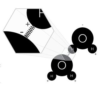 Liaison hydrogène entre deux molécules H2O par effet de polarité négatif/positif entre ces atomes d'oxygène et d'hydrogène.